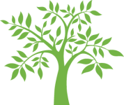Kiva tree